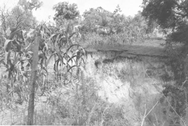 PHOTO: State Archives of Florida / View of sinkhole and corn field by Reves William D. 1963
